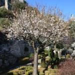le jardin médiéval, bibi©