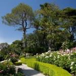Villa Ephrussi de Rothschild - La roseraie, F. Fillon©