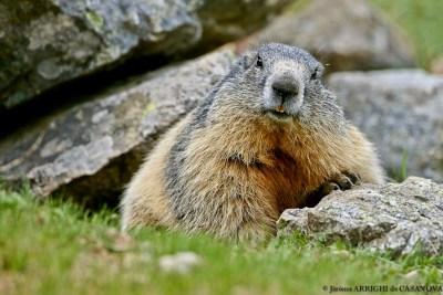 Marmotte-6032-Fenestre