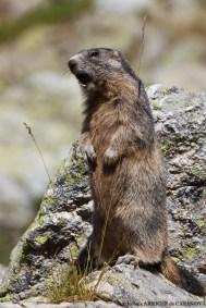 Marmotte-8580-Fenestre