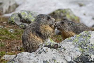 Marmottes-5128-Fenestre