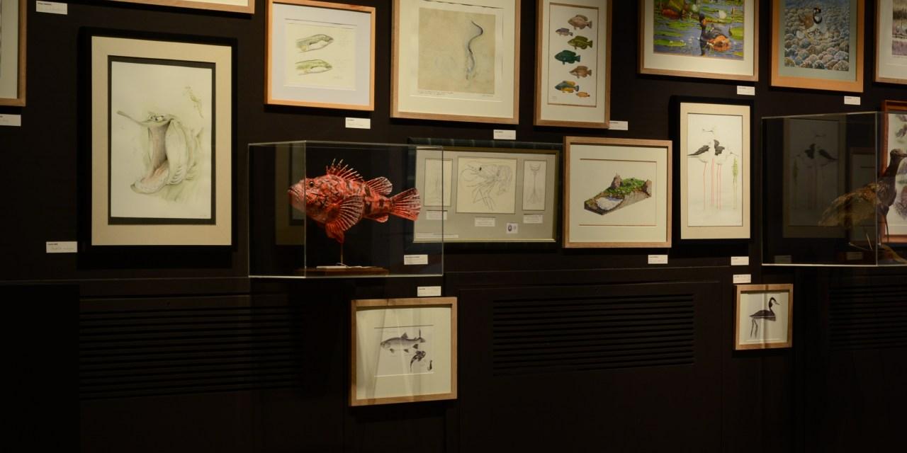"""Exposition temporaire """"regards sur le dessin naturaliste"""""""