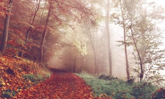 Les Randonnées d'Octobre 2018