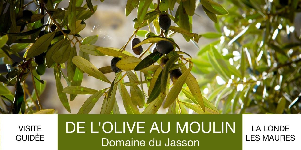 Visite guidée « de l'olive au moulin » au domaine du Jasson
