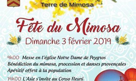 Fête du Mimosa à Tanneron