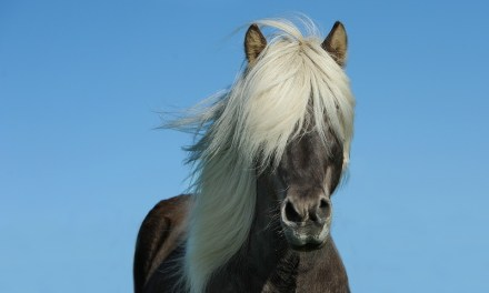 A cheval 06