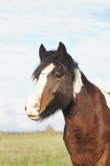 redwings horse sanctuary oxhill