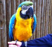 birdland parrot bourton cotswolds