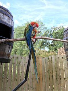 birdland-bourton-cotswolds-concierge (1)