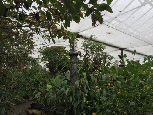 stratford-butterfly-farm-cotswolds-concierge-1