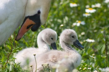 slimbridge-wetland-centre-cotswolds-concierge (2)