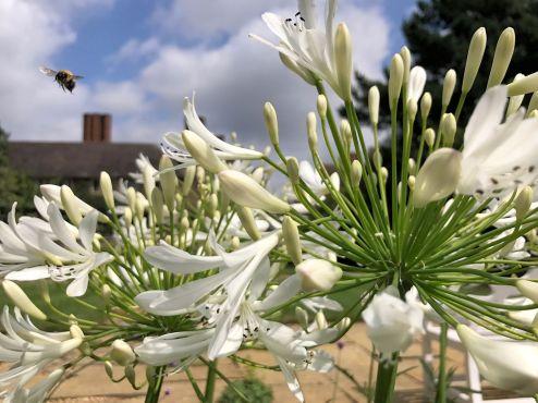 mallory-court-garden-cotswolds-concierge (14)