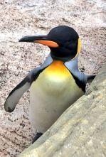 birdland-bourton-on-the-water-cotswolds-concierge (26)
