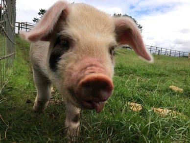 cotswold-farm-park-cotswolds-concierge-summer (9)