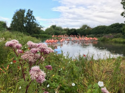 slimbridge-wetlands-centre-cotswolds-concierge (12)