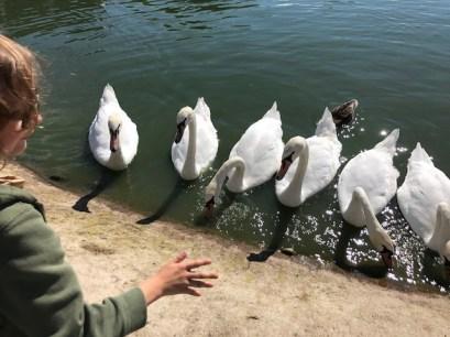 slimbridge-wetlands-centre-cotswolds-concierge (25)