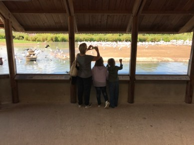 slimbridge-wetlands-centre-cotswolds-concierge (47)