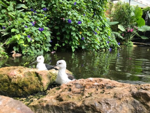 slimbridge-wetlands-centre-cotswolds-concierge (51)