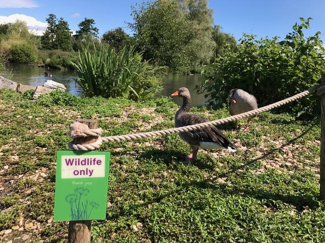 slimbridge-wetlands-centre-cotswolds-concierge (56)