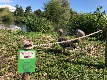 slimbridge-wetlands-centre-cotswolds-concierge (56)