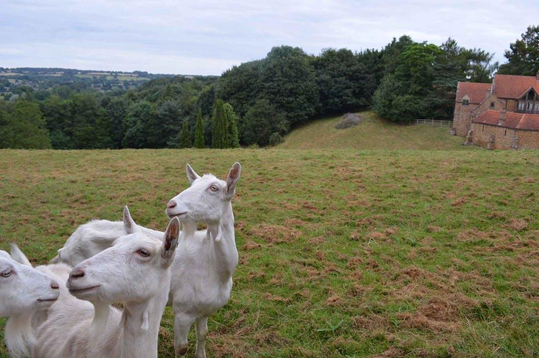heath-farm-holiday-cottages-cotswolds-concierge (18)