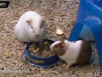Cotswold Farm Park Kids Day Out
