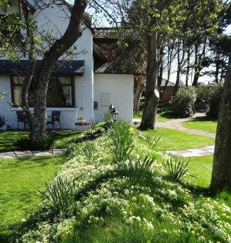 Cottage garden blog