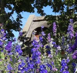 Vivid blue of the Larkspur we love!