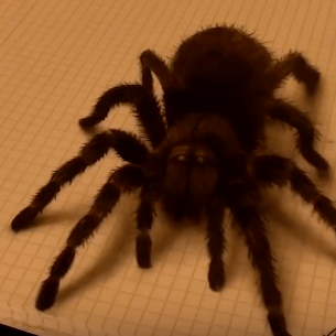 3D Spider Speed Painting by Stefan Pabst