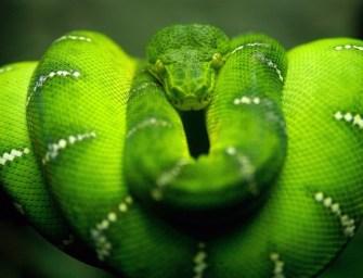 Il y a des serpents à Bali?