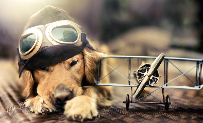 pas pret au decollage...... Dog-plane-points