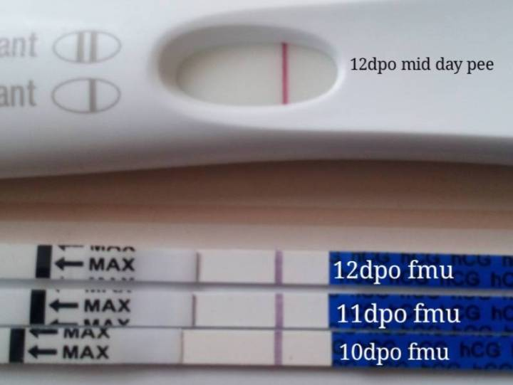 10 Dpo Pregnancy Test Gallery Pregnancy Test
