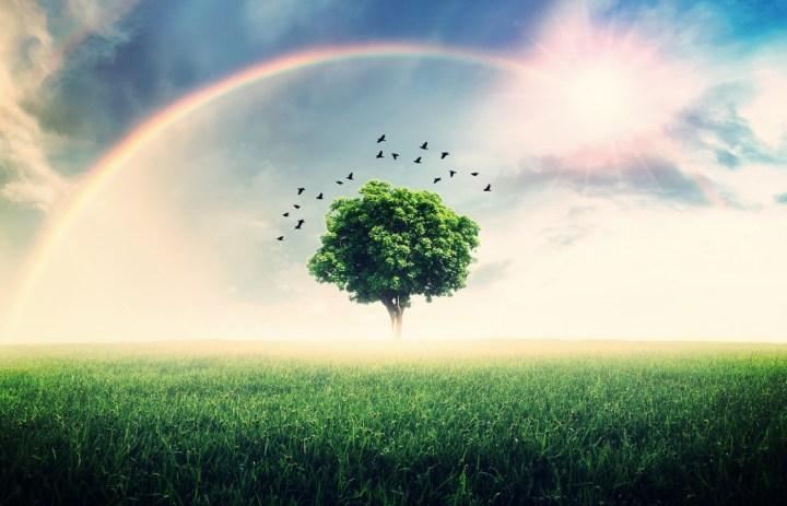 Gisella Cardia - Neue Himmel und eine neue Erde