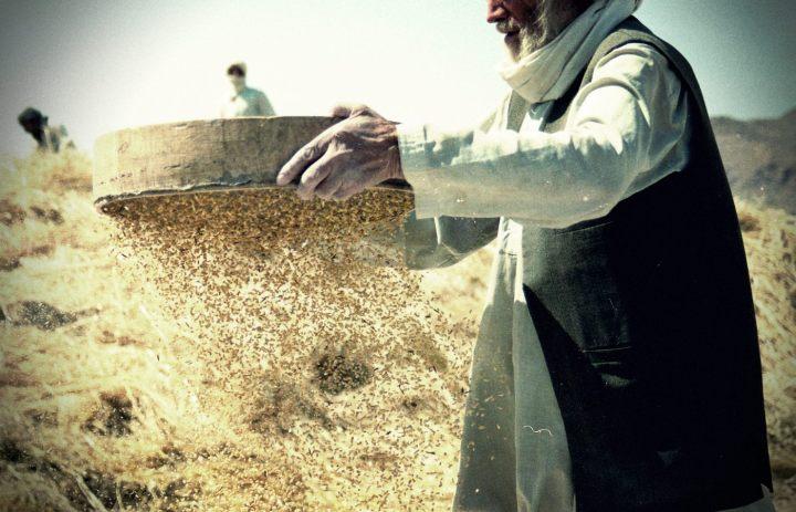 Luz de Maria - Tamiser le blé