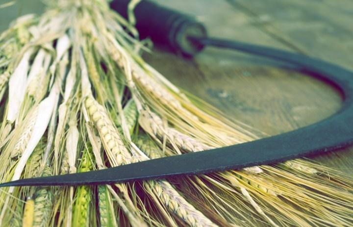 Luz de Maria – The Harvest is Approaching