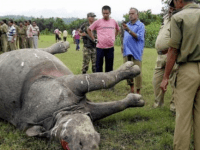 Margins And Solidarity At Perils In Assam: The Case of Kaziranga National Park And Beyond