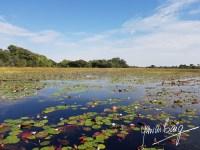 Come to the Okavango