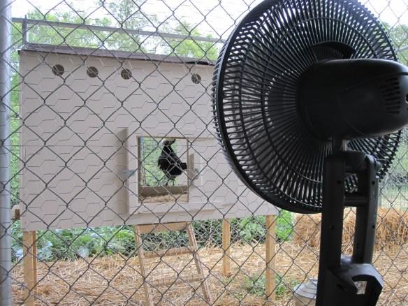 Backyard chicken coop in summer