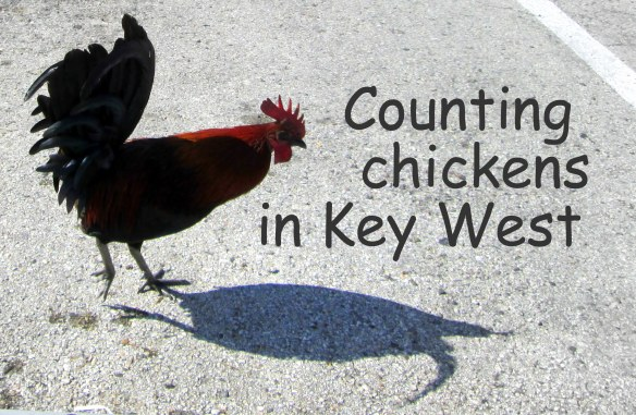 Counting Chickens in Key West