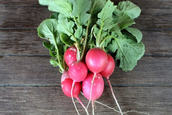 Radishes from my kitchen garden