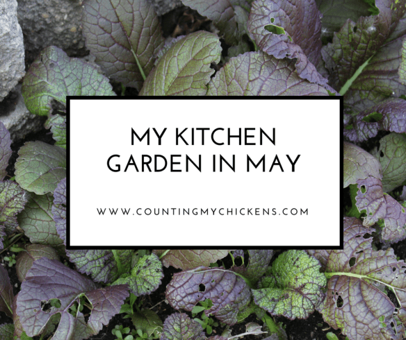 My kitchen garden in May