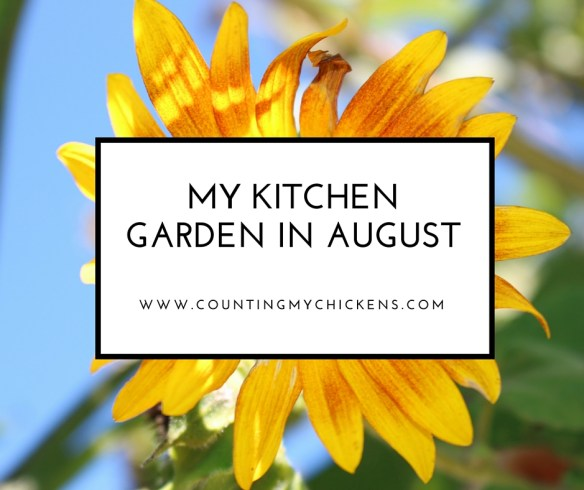 My kitchen garden in August