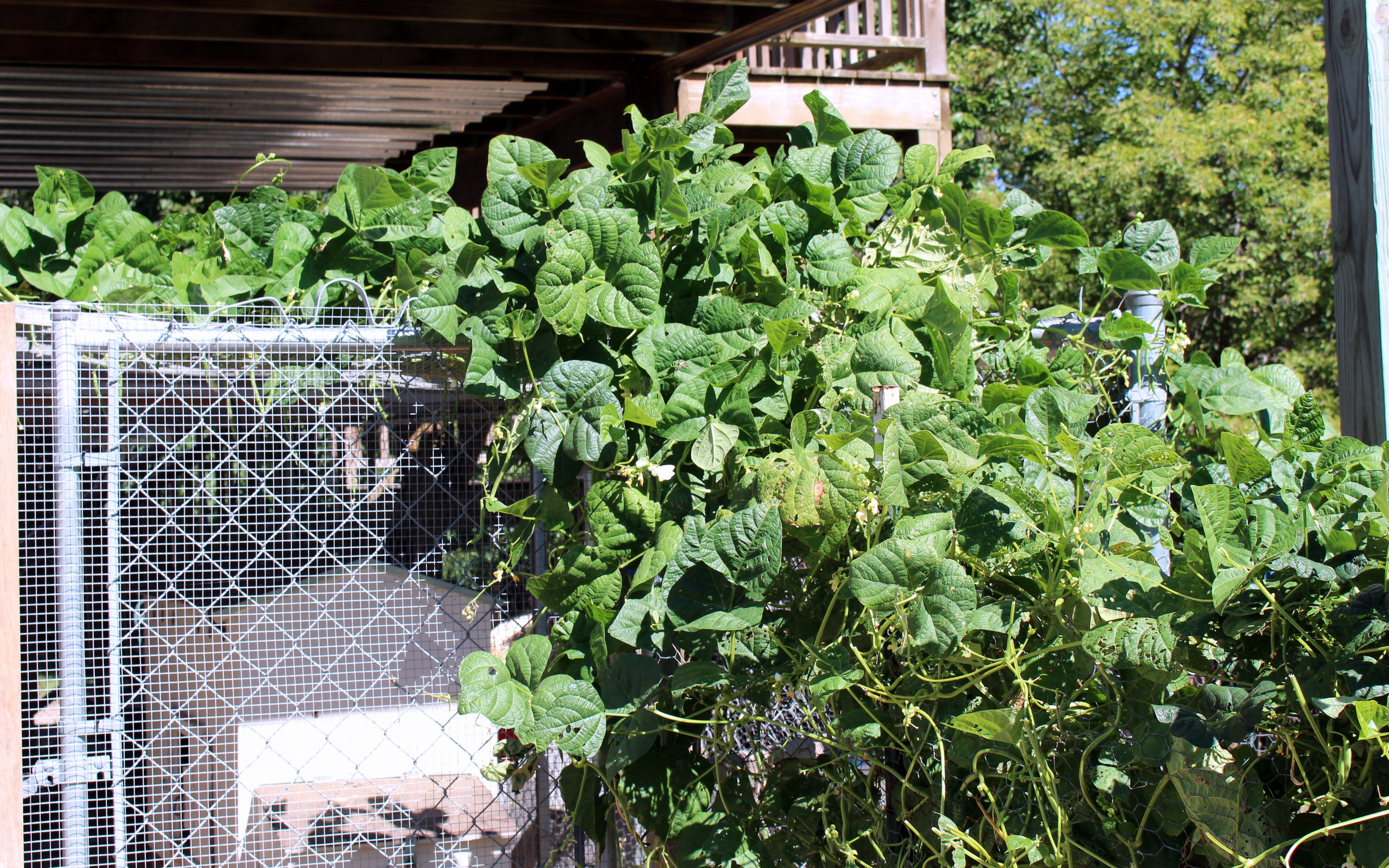 My Kitchen Garden My Kitchen Garden In September Counting My Chickenscounting My