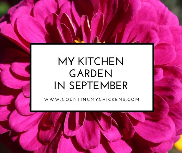 My Kitchen Garden in September