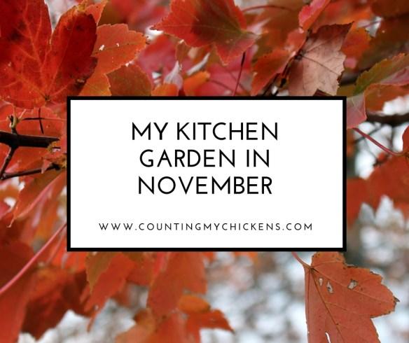 My Kitchen Garden in November