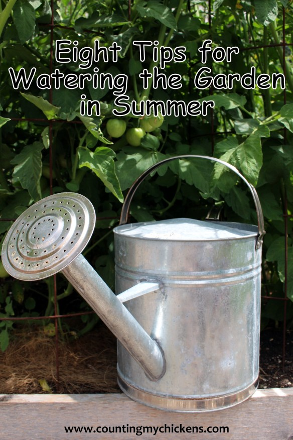Eight Tips for Watering the Garden in Summer