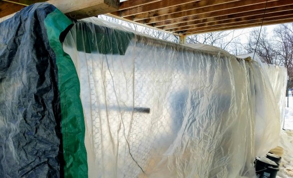Caring for Chickens in Extreme Weather