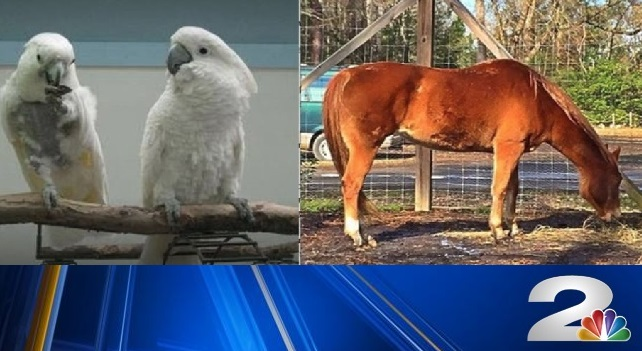 SC Cares animal rescue sanctuary to close