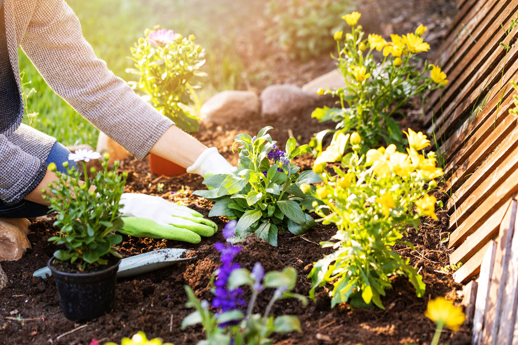 Sustainable Gardening: A Guide | Eco-Friendly Gardening Tips on Gardening  id=88737