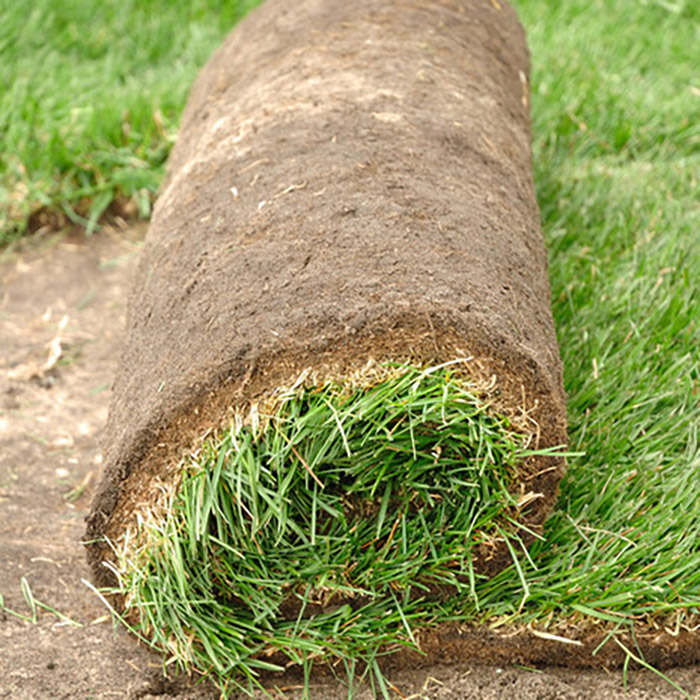 Small turfgrass sod roll